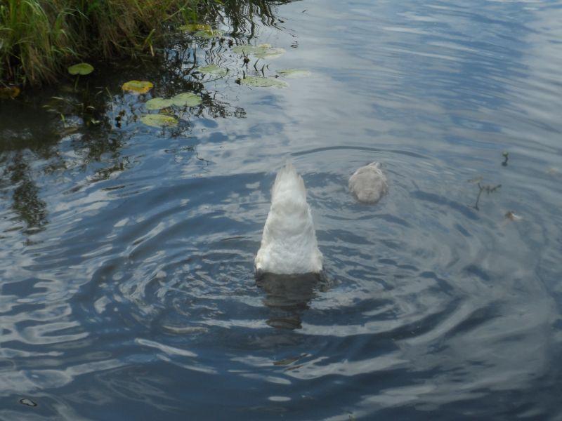 tajemniczy kształt w wodzie