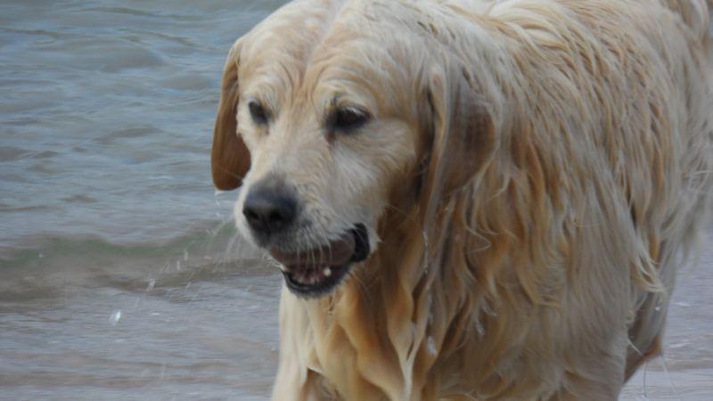 ten pies aportuje kamienie z dna